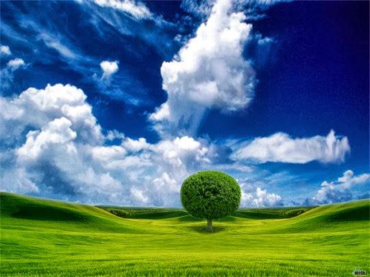 Thiên nhiên tươi đẹp