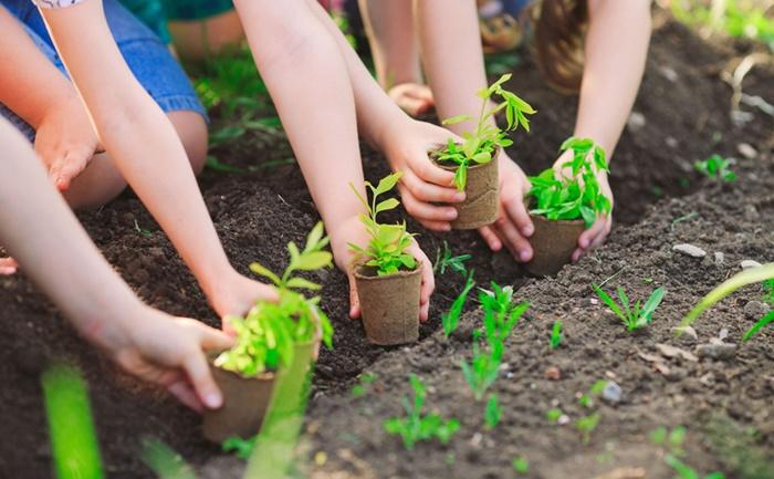 """Thủ tướng Chính phủ chỉ đạo tổ chức phong trào """"Tết trồng cây"""""""